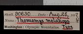 view Thomomys mazama melanops digital asset number 1