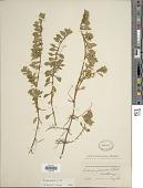 view Ludwigia palustris (L.) Elliott digital asset number 1