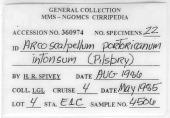 view Arcoscalpellum portoricanum intonsum digital asset number 1