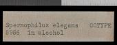 view Urocitellus elegans elegans digital asset number 1