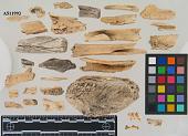 view Unidentified animal bone digital asset number 1