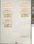 view Urochloa mutica (Forssk.) T.Q. Nguyen digital asset number 1