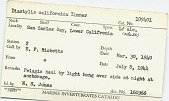 view Diastylis californica digital asset number 1