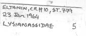 view Lysianassidae digital asset number 1