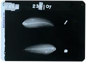 view Soleichthys heterorhinos digital asset number 1