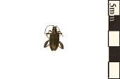 view Aquatic Leaf Beetle digital asset number 1
