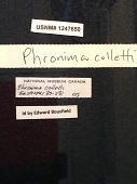 view Phronima colletti digital asset number 1