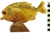 view Piranha digital asset number 1