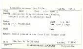 view Hermenia verruculosa digital asset number 1