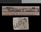 view Thomomys talpoides medius Goldman, 1939 digital asset number 1