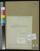 view Phormidium subincrustatum F.E. Fritsch & Rich, F. digital asset number 1