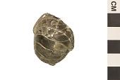 view Fossil Nautilus digital asset number 1