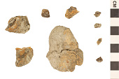 view Coprolite digital asset number 1