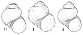 view Pyrgulopsis humboldtensis digital asset number 1