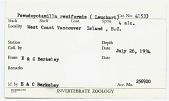 view Pseudopotamilla reniformis digital asset number 1