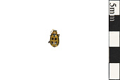 view Leaf Beetle digital asset number 1