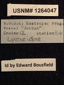 view Lycaeidae digital asset number 1