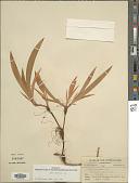 view Iris cristata digital asset number 1