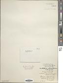 view Schizothrix calcicola Gomont digital asset number 1