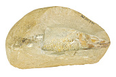 view Ray-finned Fish digital asset number 1