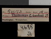 view Thomomys talpoides yakimensis digital asset number 1