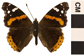 view Red Admiral digital asset number 1
