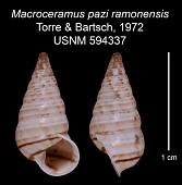 view Macroceramus pazi ramoensis digital asset number 1