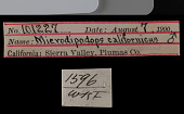 view Microdipodops megacephalus californicus digital asset number 1