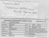 view Belyaevicrinus latipinnulus digital asset number 1