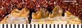 view Copelemur australotutus Beard, 1988 digital asset number 1