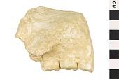 view Fossil Ape, Fossil Primate, Fossil Ape, Fossil Primate digital asset number 1