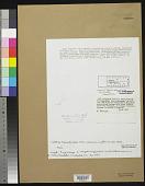 view Calothrix breviarticulata W. West & G.S. West digital asset number 1