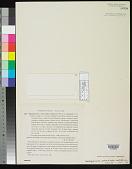 view Oedogonium crenulato-costatum var. aureum Tilden digital asset number 1