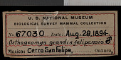 view Orthogeomys grandis felipensis Nelson & Goldman, 1930 digital asset number 1