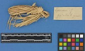 view Botanical Specimens From Quileute Indians digital asset number 1