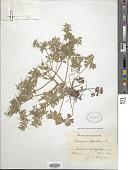 view Geranium dissectum L. digital asset number 1