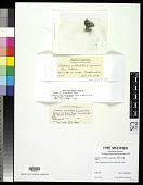 view Cladonia cristatella f. squamulosa Robbins ex A. Evans digital asset number 1