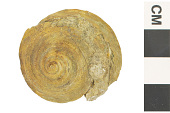view Fossil Snail digital asset number 1