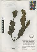 view Vernonia auyantepuiensis Aristeg. digital asset number 1