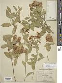 view Callaeum septentrionale (A. Juss.) D.M. Johnson digital asset number 1