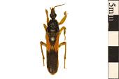 view Assassin Bug, Assassin Bug, Kissing Bug digital asset number 1