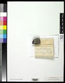 view Biatora scrupulosa Eckfeldt digital asset number 1