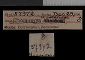 view Thomomys umbrinus zacatecae Nelson & Goldman, 1934 digital asset number 1