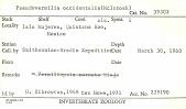 view Pseudovermilia occidentalis digital asset number 1