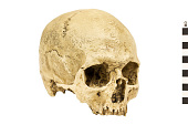 view Cro-Magnon 1, Human digital asset number 1