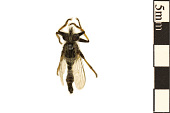 view Robber Fly digital asset number 1