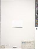 view Drosera nitidula Planch. digital asset number 1