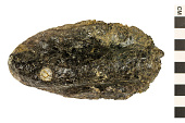 view Pacific Giant Oyster digital asset number 1