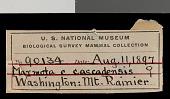 view Marmota caligata cascadensis Howell, 1914 digital asset number 1