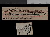 view Thomomys umbrinus enixus Nelson & Goldman, 1934 digital asset number 1